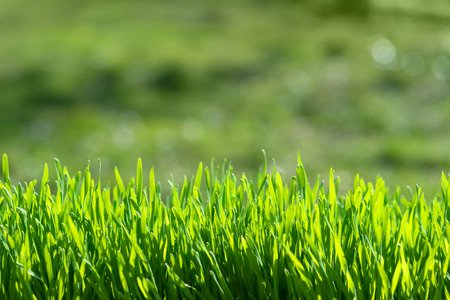 44572116 - green grass on green background